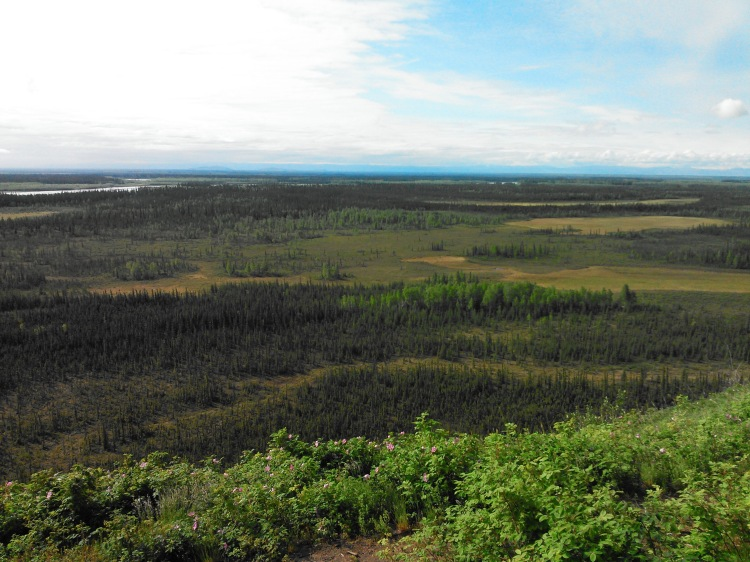 Overlooking the Tanana River Valley