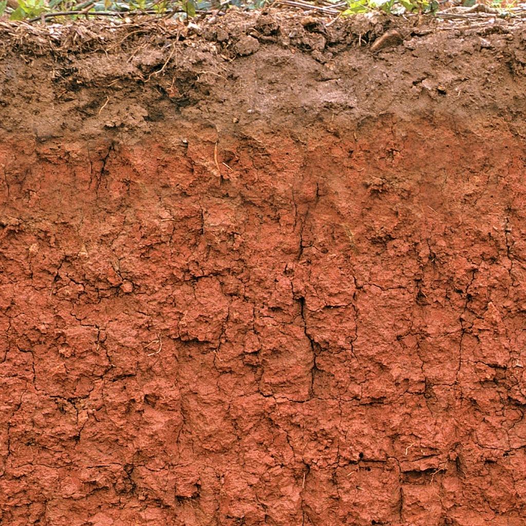 A soil profile