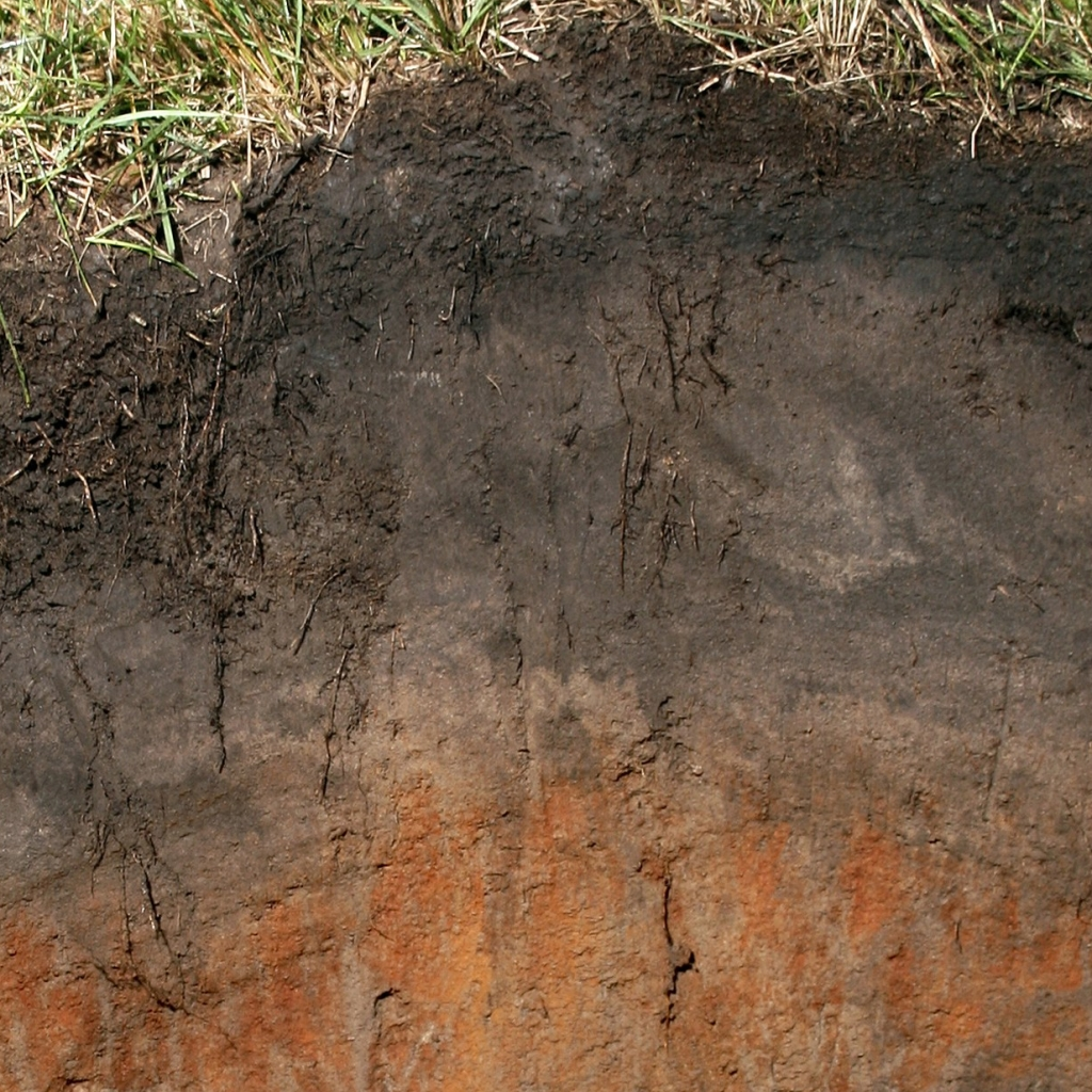 A soil profile